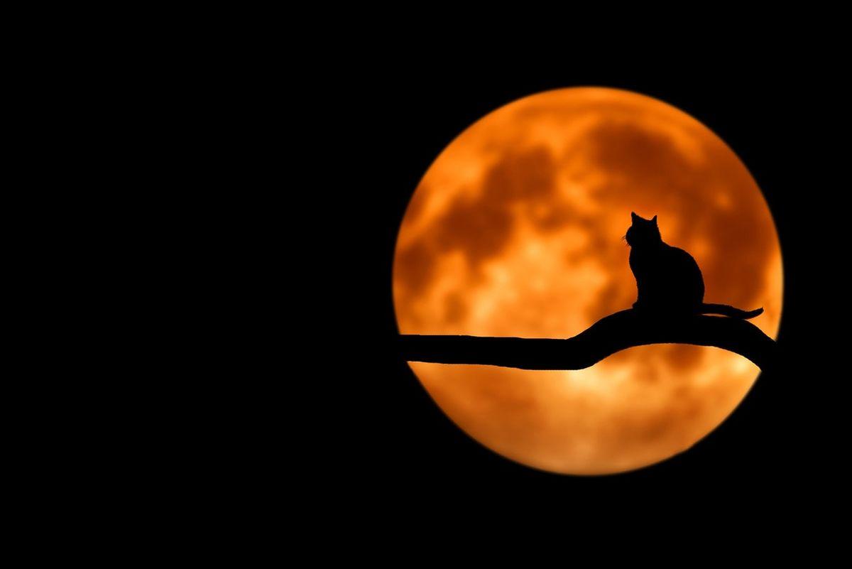 中秋節的故事:嫦娥奔月、吳剛伐桂、玉兔傳說、唐明皇遊月宮
